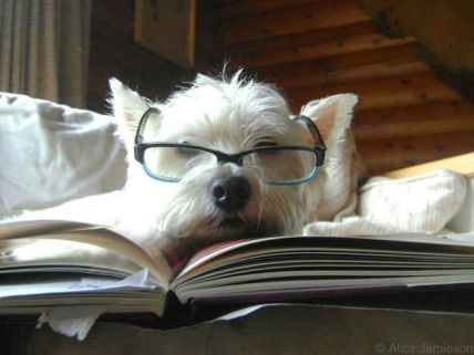 Dog- With a Book 5