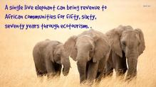 Elephant Conservation and Eco-Tourism