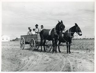 Farm Wagon- Ben Turner and family in their wagon with mule team. Flint River Farms GA, May 1939