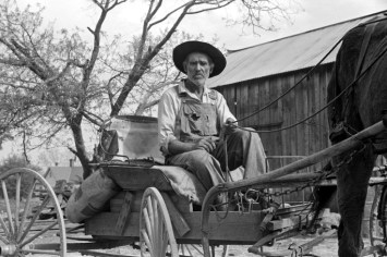 Farm Wagon- Lee Betties, rural rehabilitation client, with sack of horse and mule feed on rear of wagon, leaving general store at Woodville, Greene County, Georgia, 1939