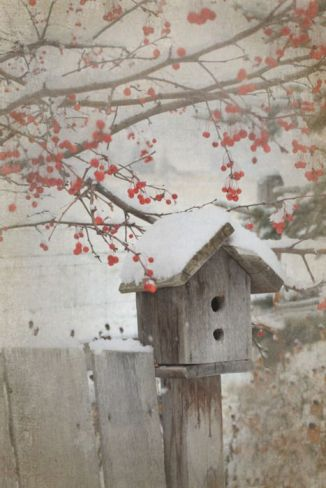 Bird House with Berries in Snow - found on Tiny White Daisies tumblr. com
