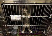 Pet- Adoption 2