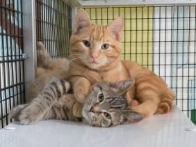 Pet- Adoption 6