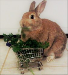 Bunny with Cart