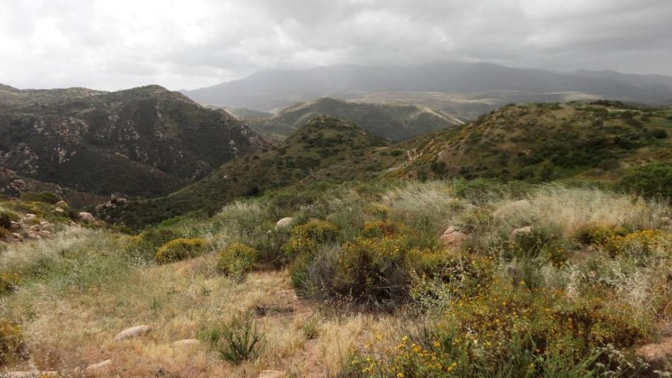 Hollenbeck Canyon, San Diego