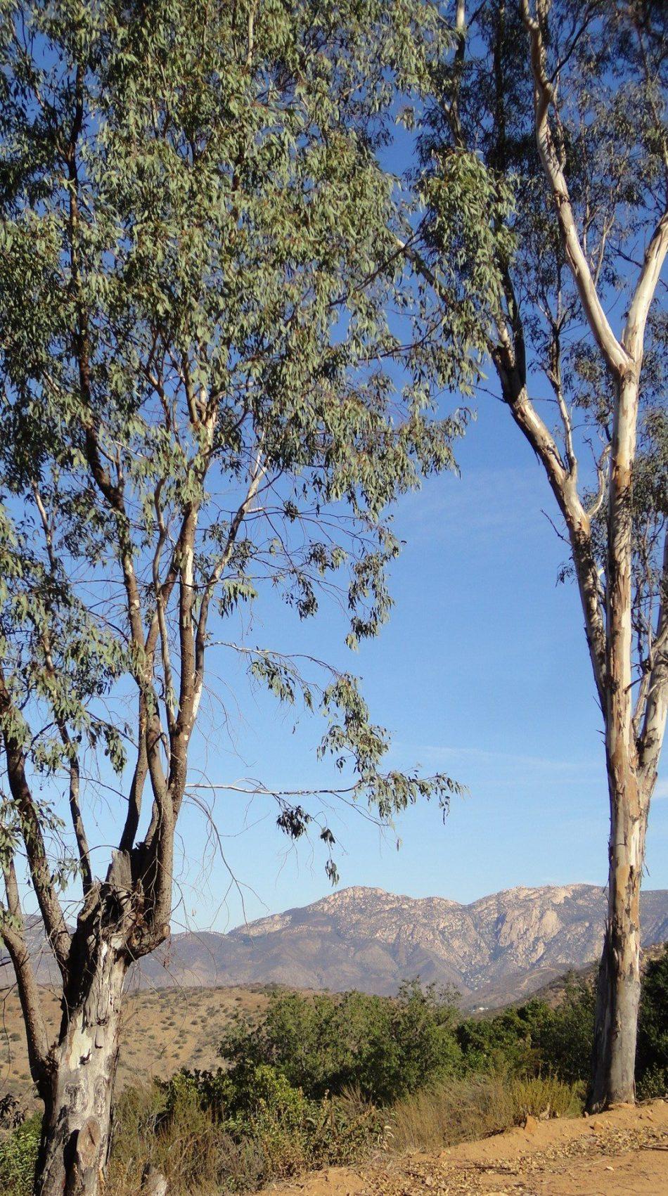 Crestridge Eco Reserve