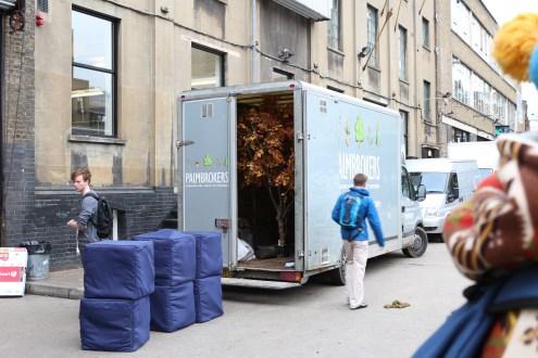 Tree in a truck (unusual)