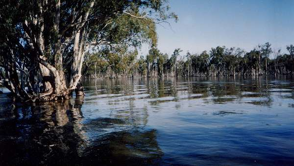 The Murray River in flood in 1990, I think.