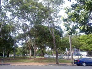 Ward Park on Lansdowne Street in Surry Hills