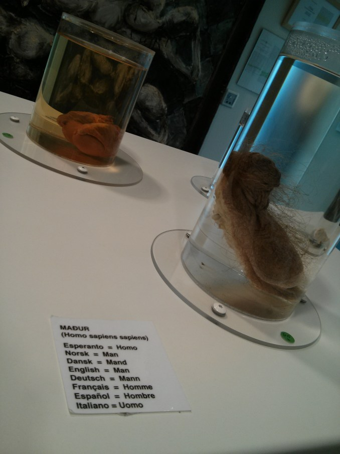 Human penis at the Icelandic Phallological Museum