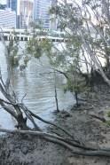 The muddy Brisbane River