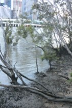 The muddy Brisbane River