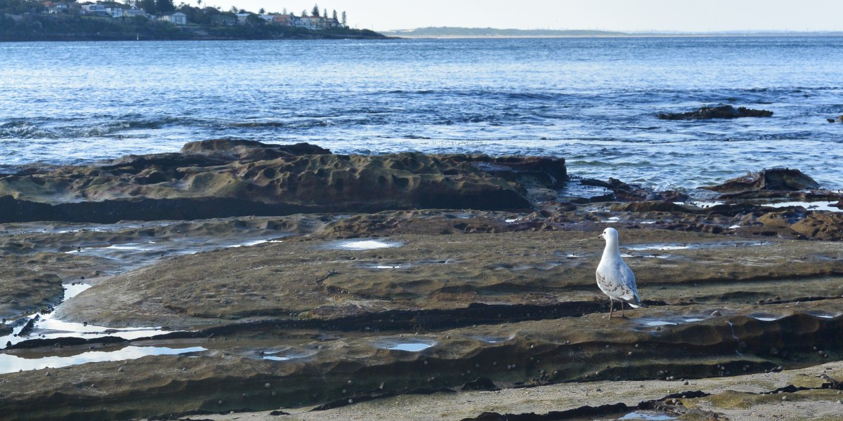 Bundeena Day Trip