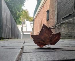 Laneway Leaf