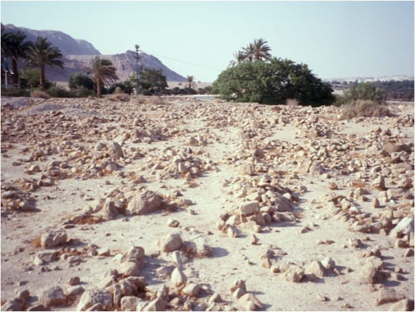 The Qumran Cemetery--Shall These Bones Live?