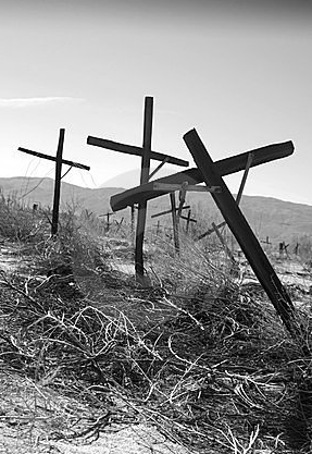 Abandoned Vinyard Pic cross