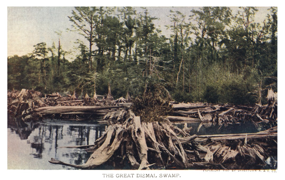 06PCJamestown Exposition00169 - The Great Dismal Swamp copy