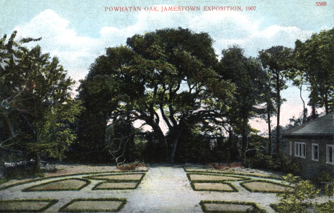 06PCJamestown Exposition00183 - Powhatan Oak copy