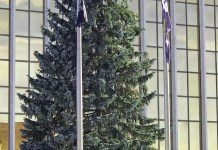 City of Jamestown's 2019 Christmas Tree