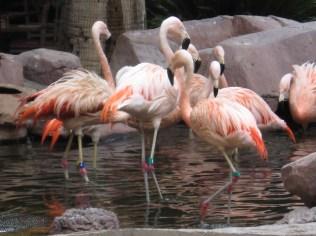 Flamingos at ... surprise, The Flamingo