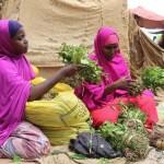 kenaya-and-somalia-business
