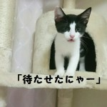 保護猫ソラ・ゆき【毛玉日記】#15