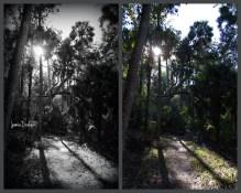 Trail to the Cistern Jamie Drake ©