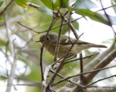 Warblers Everywhere!