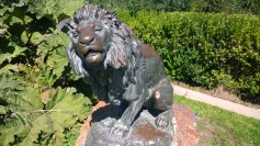 A lion that looks like it has digestive issues