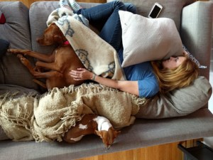 vizsla and weiner dog napping