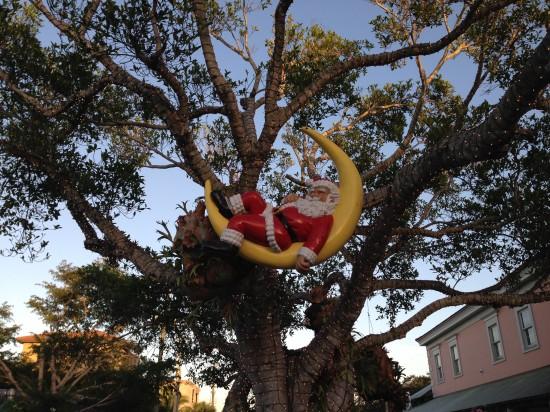 Santa in a Tree
