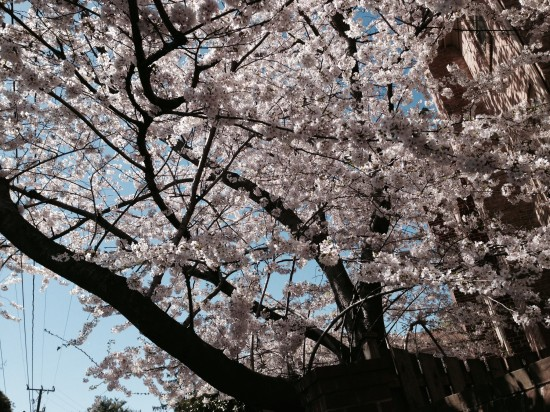 Blossoms by the house