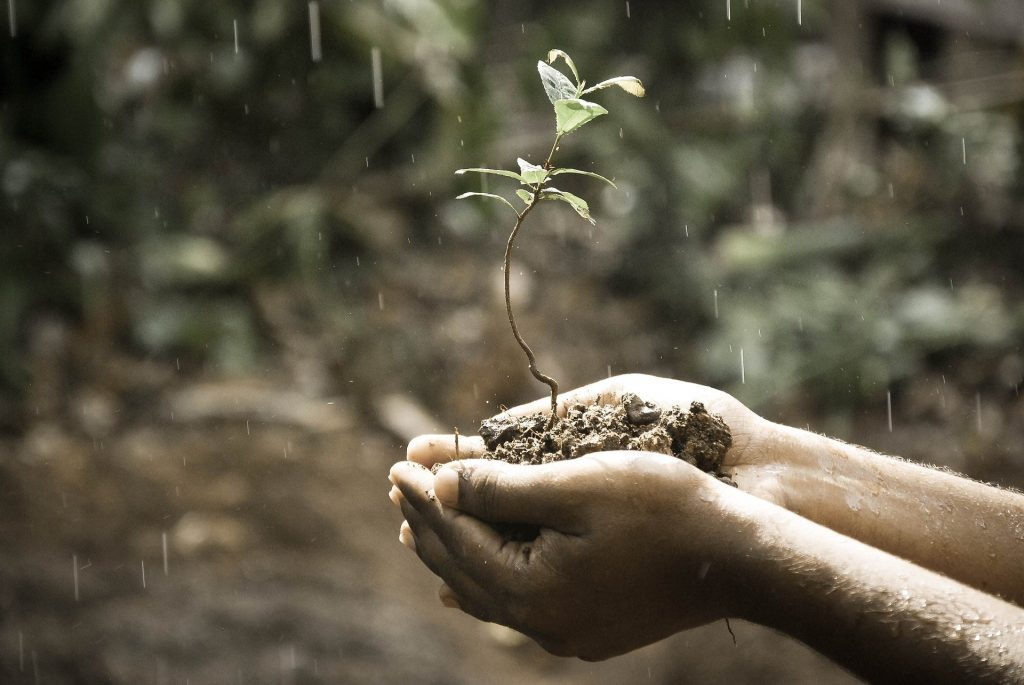 a pair of hands holding a sapling growing from the dirt help, changing and growing with goals