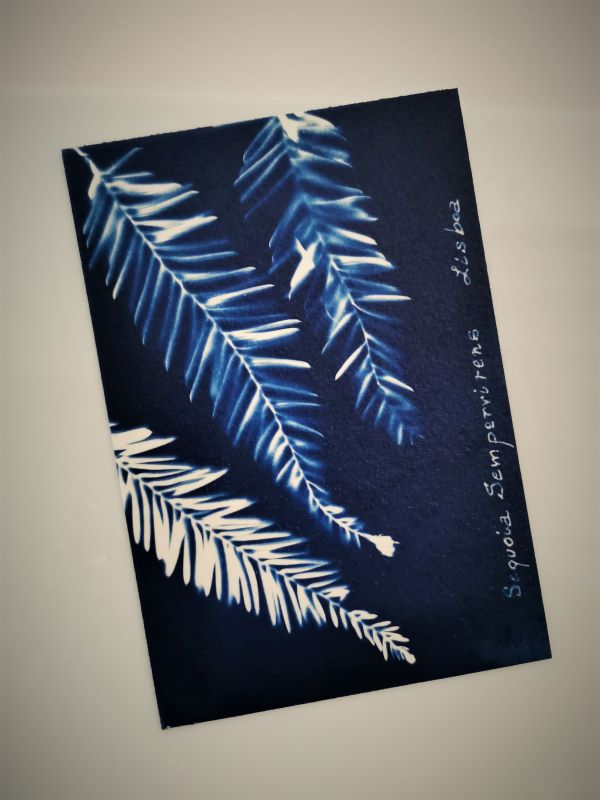 printing process with the ancient technique of cyanotype