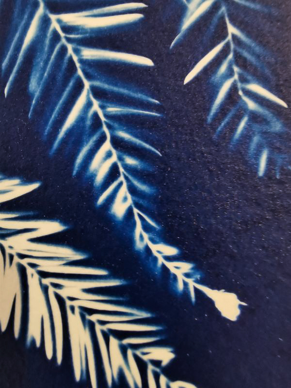 detail card printing with the ancient technique of cyanotype or printing with the sun
