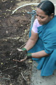 Hirabai explains the process of vermicompost to visitors participating in the Summer Experiential Course.