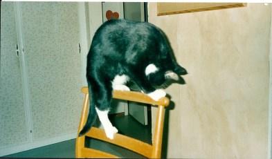 Sippo klättrar på stol.