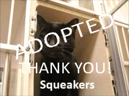 Squeakers ADOPTED