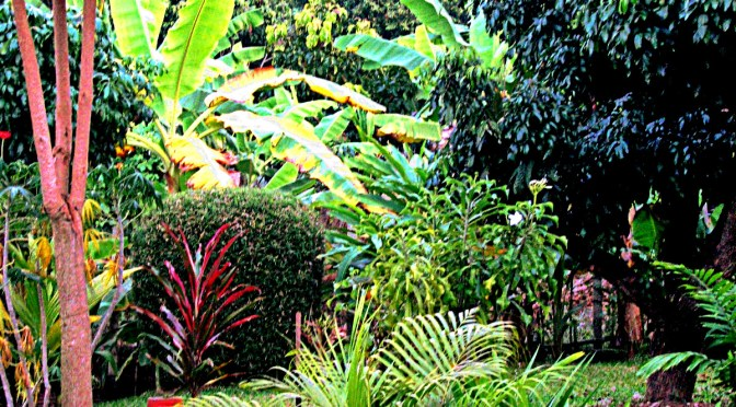 How to make a tropical garden in Thailand for only $400