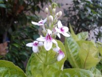 bunga-2012-02-26-06.32.00