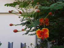 bunga-2012-02-26-06.41.22