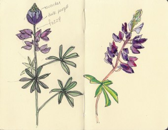 Wildcat Canyon Wildflowers, ink, colored pencil, gouache in pocket Moleskine