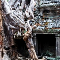 Root shrouded Ta Prohm Temple