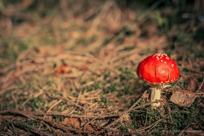 Fotografie-Tutorial Wie fotografiere ich Pilze im Wald richtig (1)