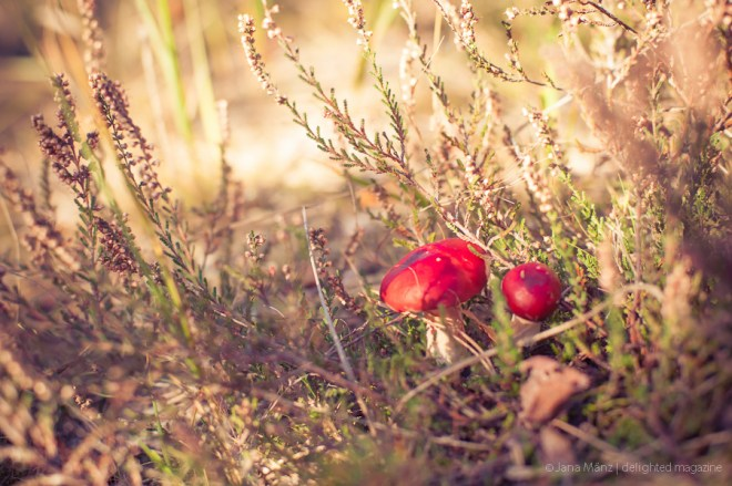 Fotografie-Tutorial Wie fotografiere ich Pilze im Wald richtig (3)