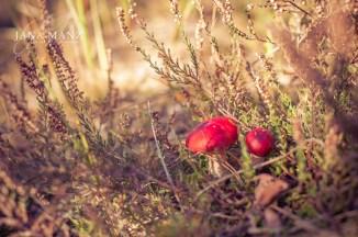 Herbst, Pilze