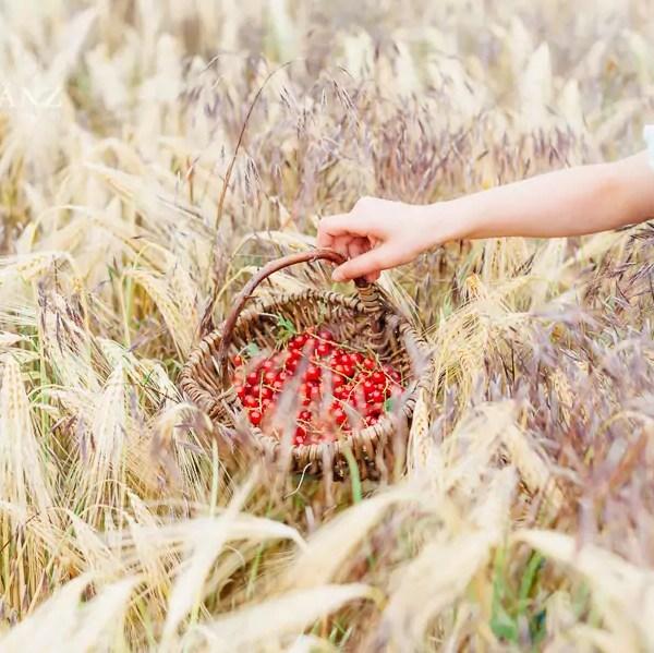 Sommerbilder – dein Onlinekurs für kreative Fotoideen Tipps und Ideen für den perfekten Fotosommer