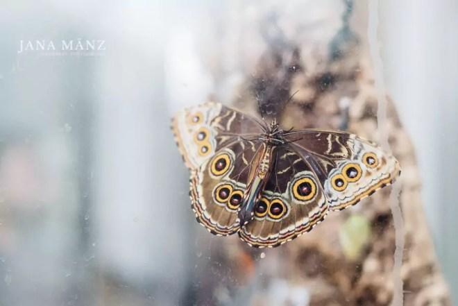 15.9. Blütenträume 2018 Botanischer Garten (Schmetterlingshaus) + Südfriedhof Leipzig 10:00 – 18:00 UhrAuch in der Stadt werden Blütenträume war. Aus diesem Grund entführe ich dich in einen der schönsten Botanischen Gärten Deutschlands, nach Leipzig. Inklusive Schmetterlingshaus. Und damit nicht genug, der Südfriedhof von Leipzig ist ein Eldorado für alle Natur- und Blumenfotografen.