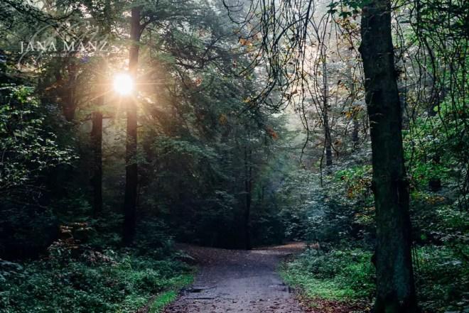 Onlinekurs: Im Einklang mit der Natur - Naturfotografie mal ganz anders