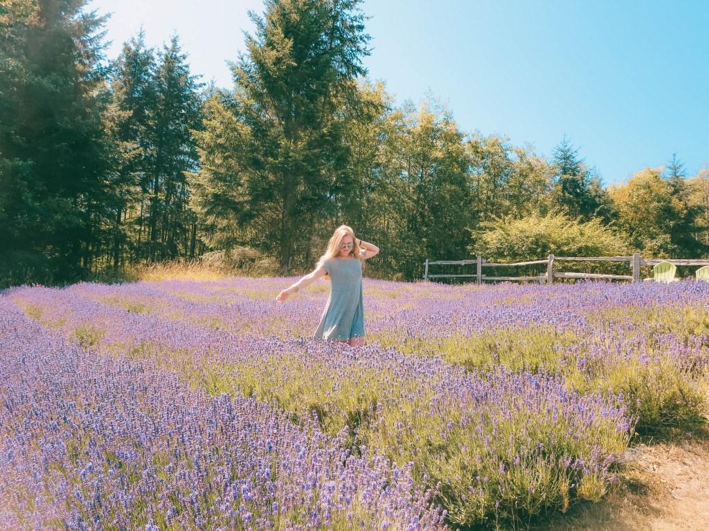 Lavenders of Salt Spring Island